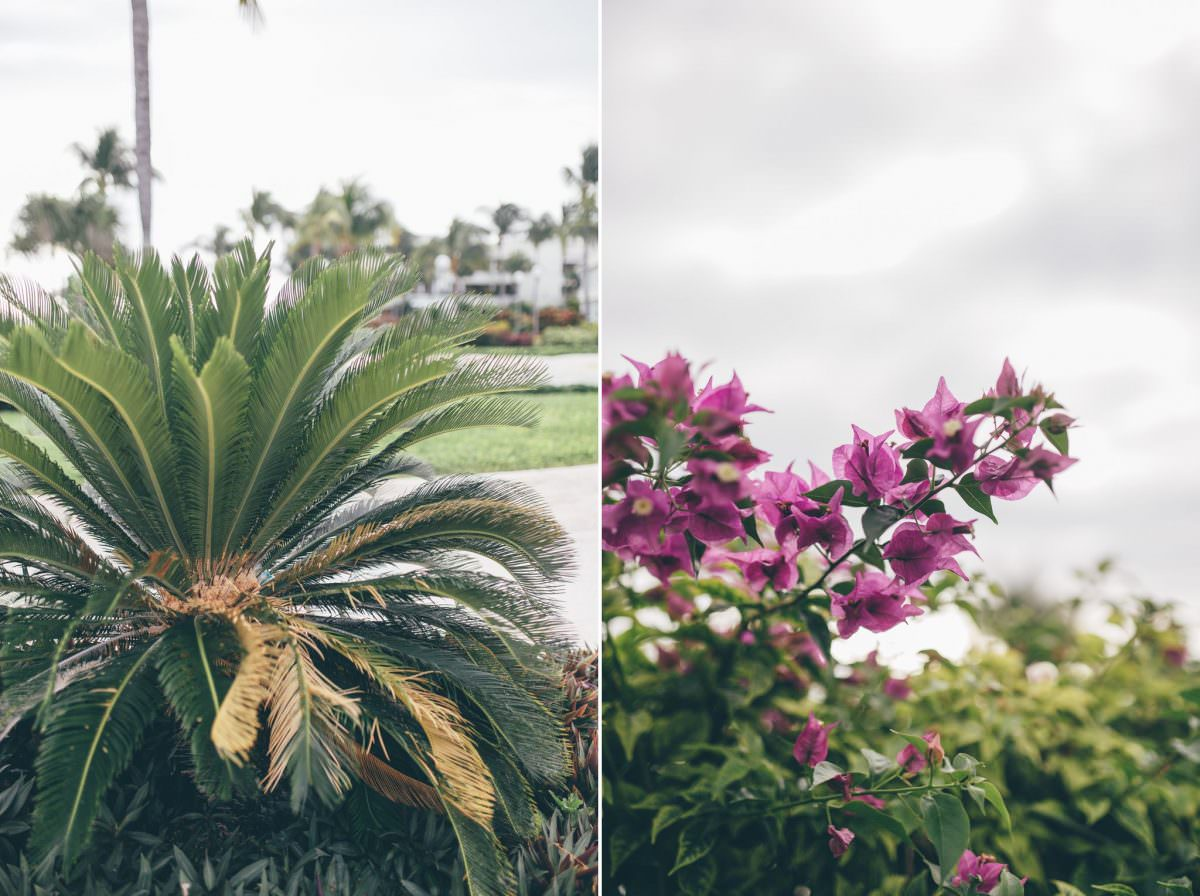 desitnation_wedding_photographer_cancun_mexico_alanna_chris_foliage_ 1