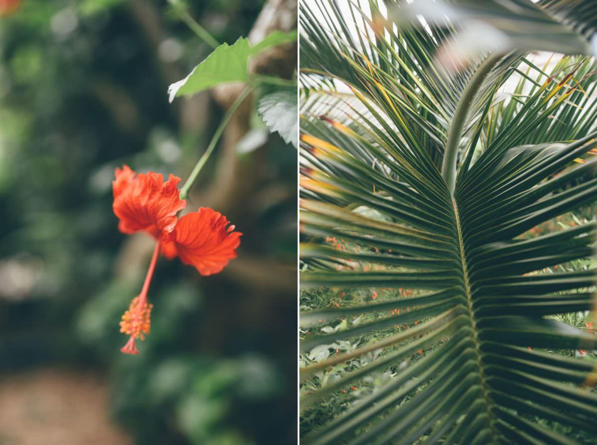 desitnation_wedding_photographer_cancun_mexico_alanna_chris_foliage_ 3