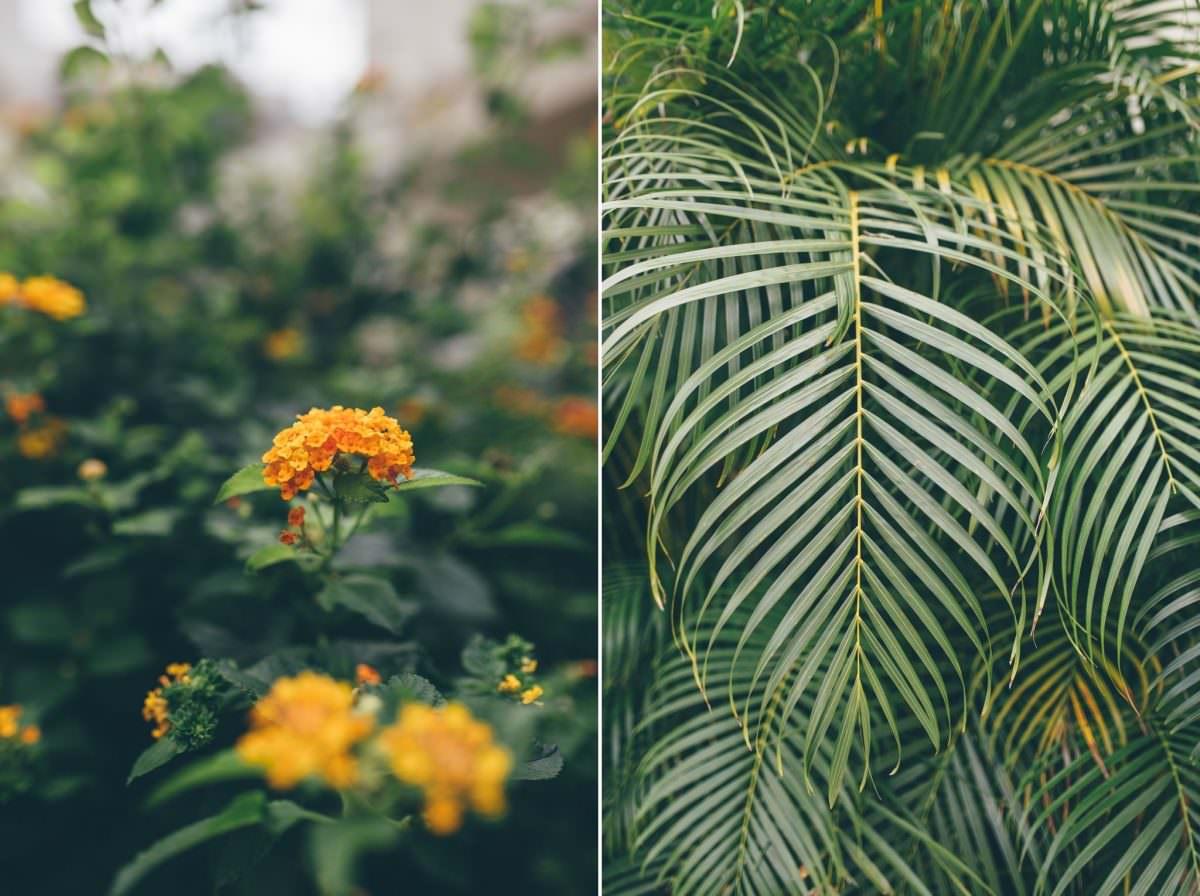 desitnation_wedding_photographer_cancun_mexico_alanna_chris_foliage_ 4