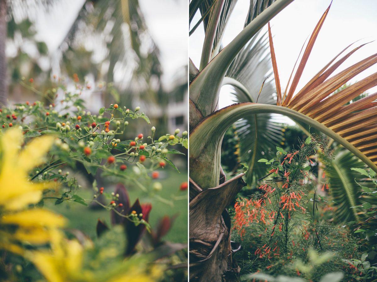 desitnation_wedding_photographer_cancun_mexico_alanna_chris_foliage_ 6