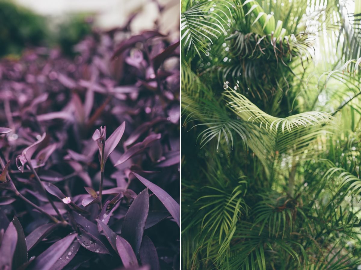 desitnation_wedding_photographer_cancun_mexico_alanna_chris_foliage_ 7