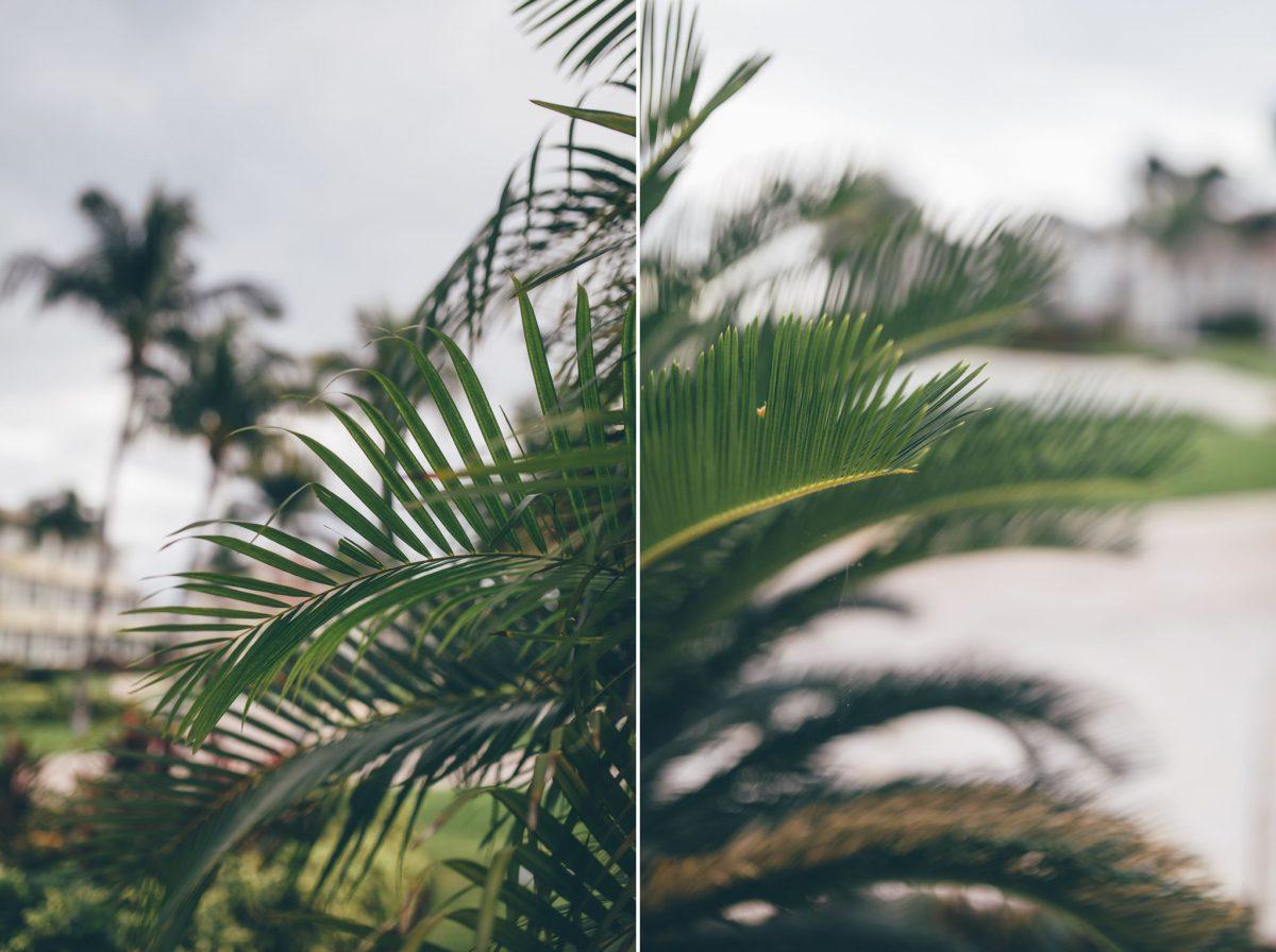 desitnation_wedding_photographer_cancun_mexico_alanna_chris_foliage_ 8