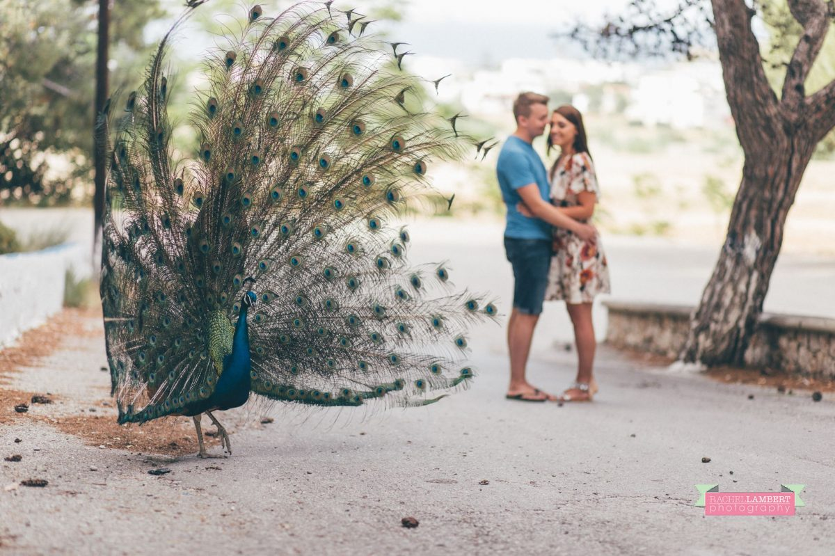 destination wedding photographer rachel lambert photography bride and groom engagement shoot peackocks